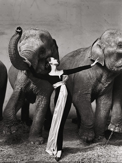 Richard Avedon's photo Dovima with Elephants