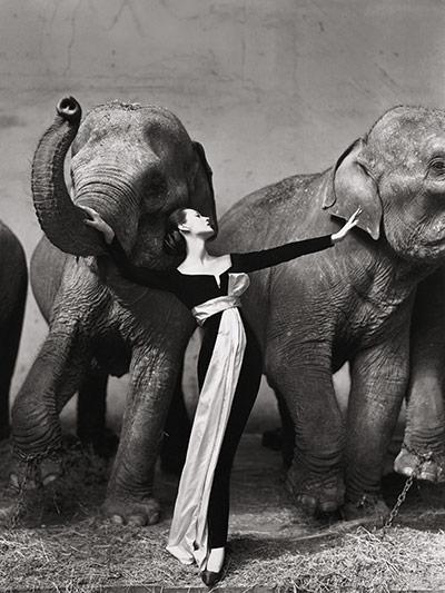Richard Avedon's photo Dovima with Elephants
