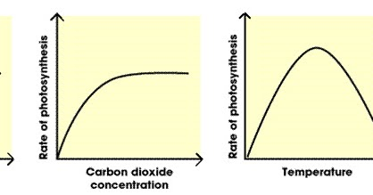 3 factors that affect the rate of photosynthesis