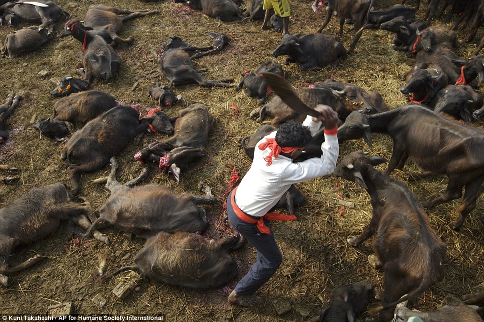 human slaughtered