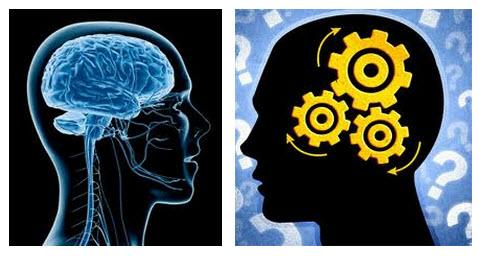 Fakta Penting Tentang Otak Manusia
