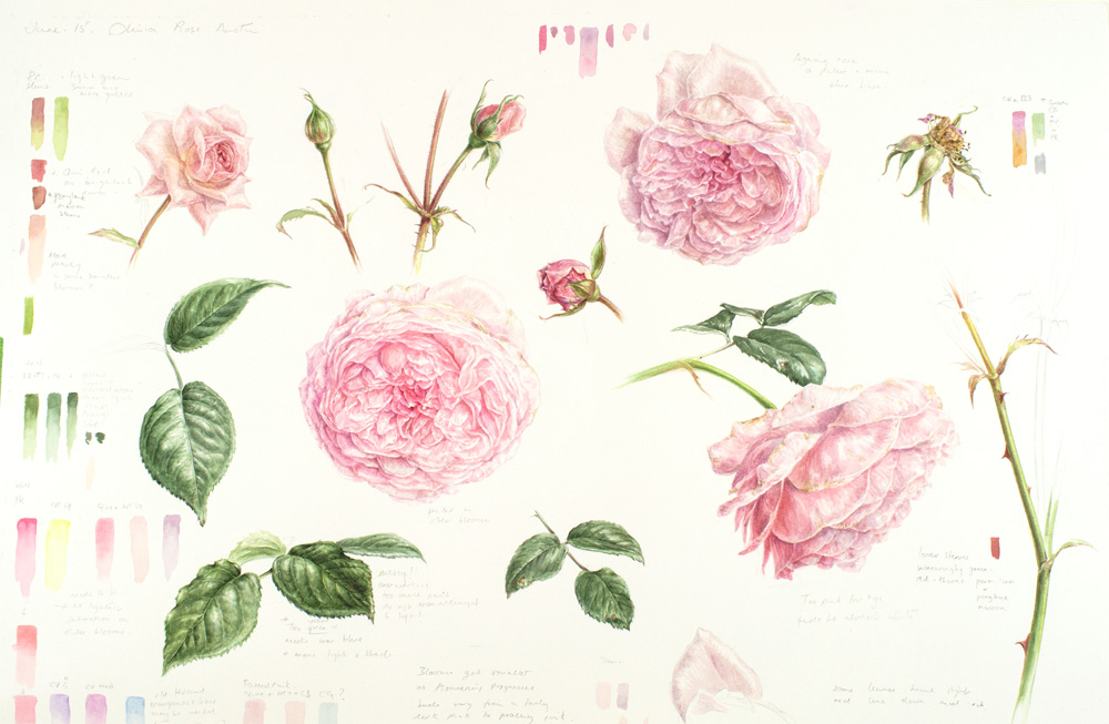 Olivia rose austin botanical study in watercolour