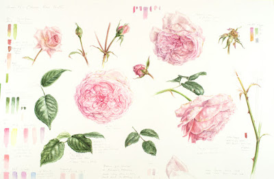 Olivia rose austin botanical study in watercolour