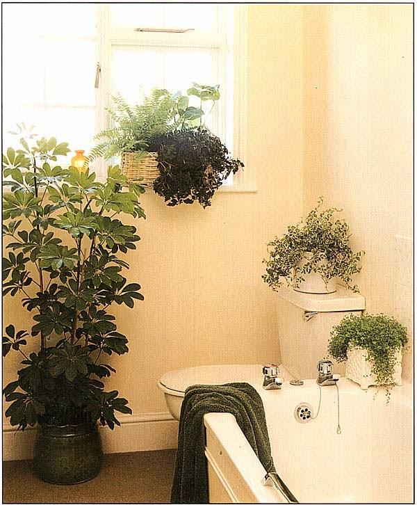 Растения, сконцентрированные вблизи окна, обычно получают недостаточно естественного света, но, размещенные во всех доступных местах, они оставляют очень приятное впечатление