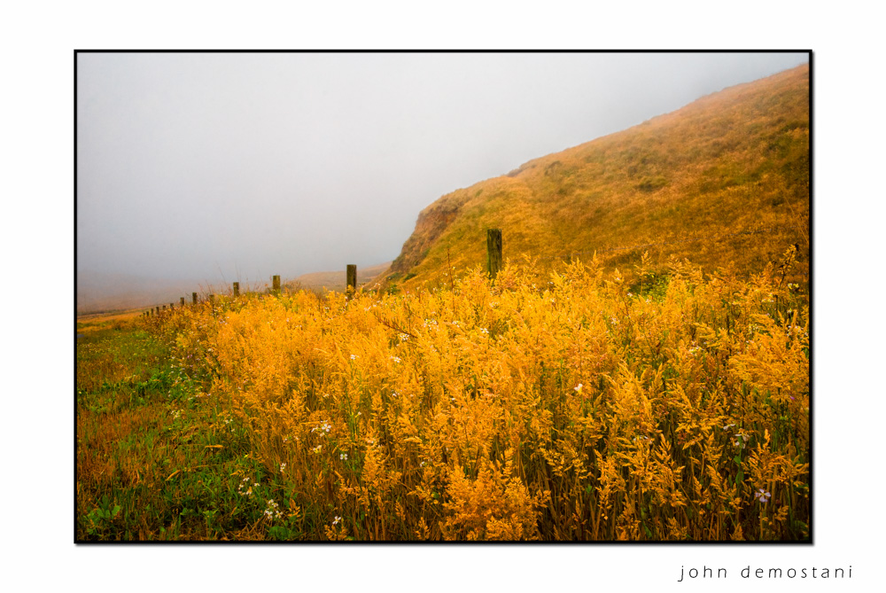 Point Reyes National Park, The Golden State, California Gold, , photography, nature, landscape photography, Impressionist