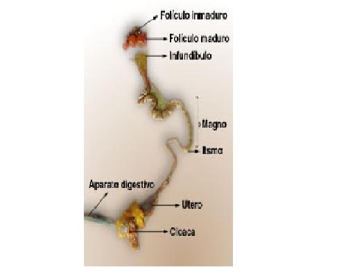 UNIDAD LOS ORGANOS Y SISTEMAS DEL CUERPO DE LOS SERES VIVOS: 2012