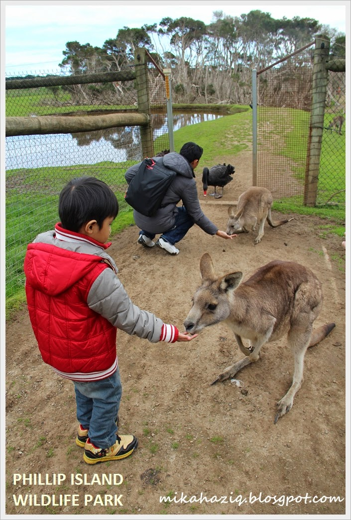 melbourne phillip island with kids wildlife park
