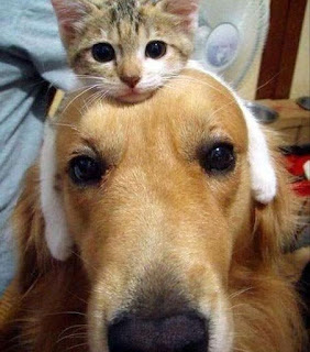 funny cat and dog its cold out wear a cat