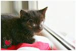 Bazarek na rzecz potrzebujących kotów - KOCI SZCZECIN
