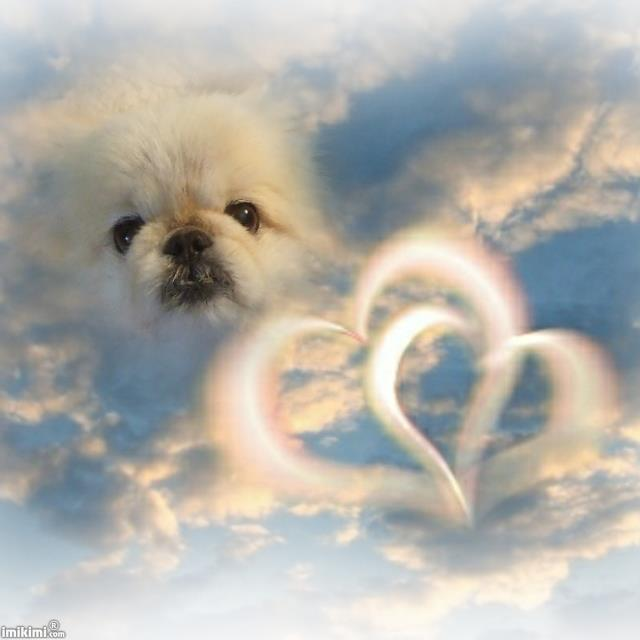 Gizzy in Heaven!