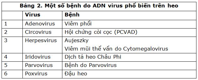 một số virus mang nhân ARN và ADN gây bệnh trên heo