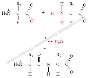 liebermann-burchard reaction for steroids