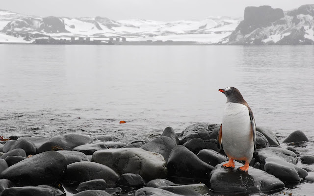 Beautiful photo with a penguin on the rocks of a icy shore near a lake