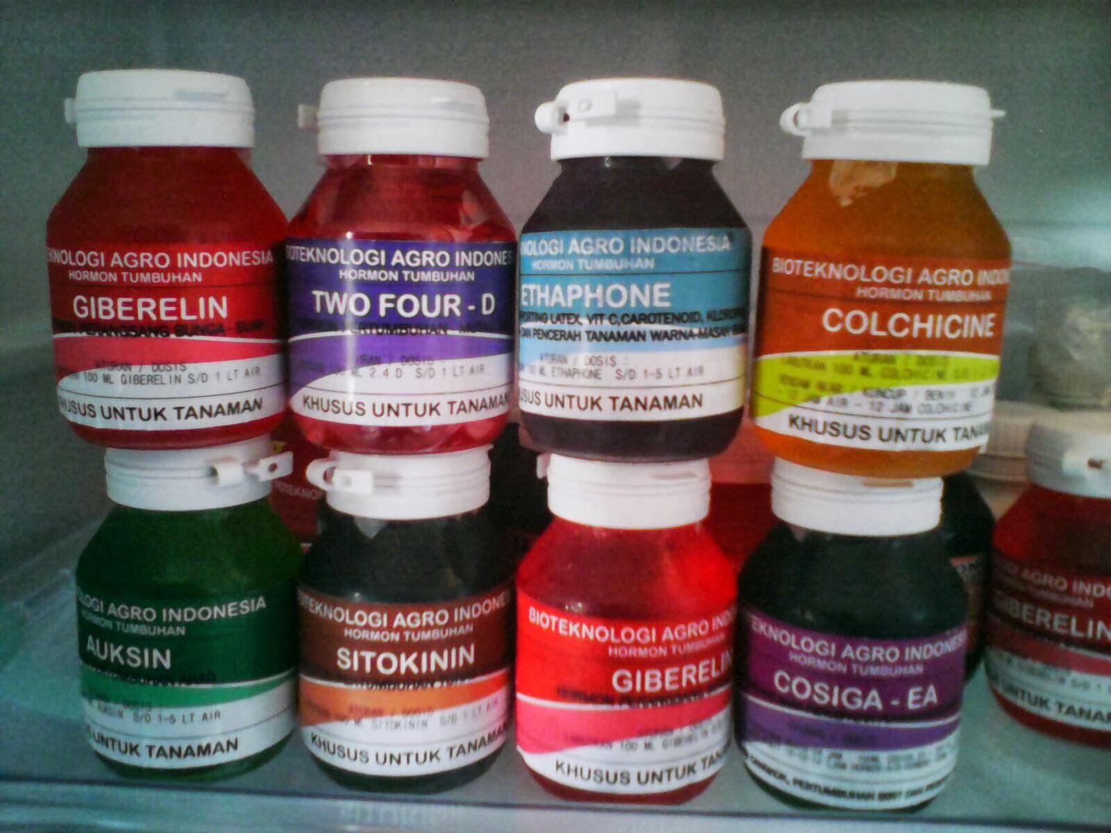 hormon tumbuhan auksin , sitokinin, giberelin, kolkisin, paclobutrasol, 2.4 D, ethapone-ethrel ,