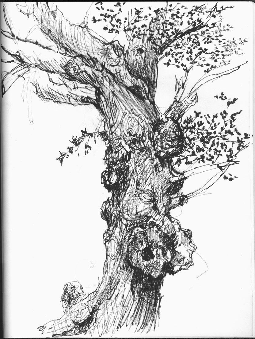 Sally sanders calligraphy design oak trees