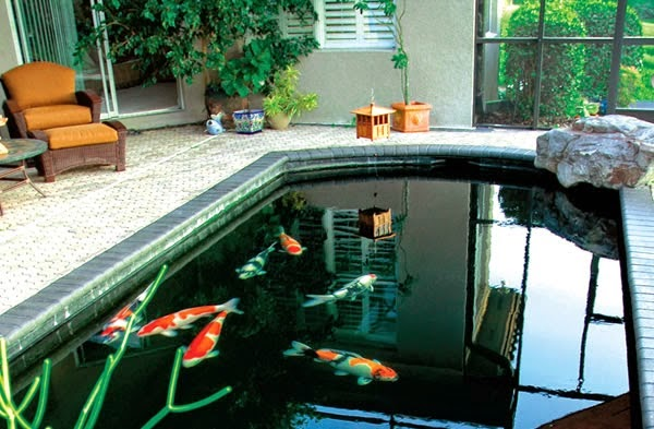 Cheap koi for Koi pond construction cost