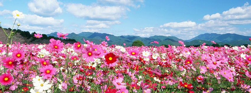 Fb Cover Photos Download Nature Flowers Facebook Cover Photo Download