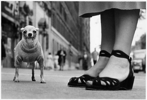 http://2.bp.blogspot.com/-xAoYWg_nbaM/TcmIpqHl3xI/AAAAAAAAASA/jeZAICOhJF8/s1600/Elliott_Erwitt_Photo_Dog_New_York_City_1946.jpg