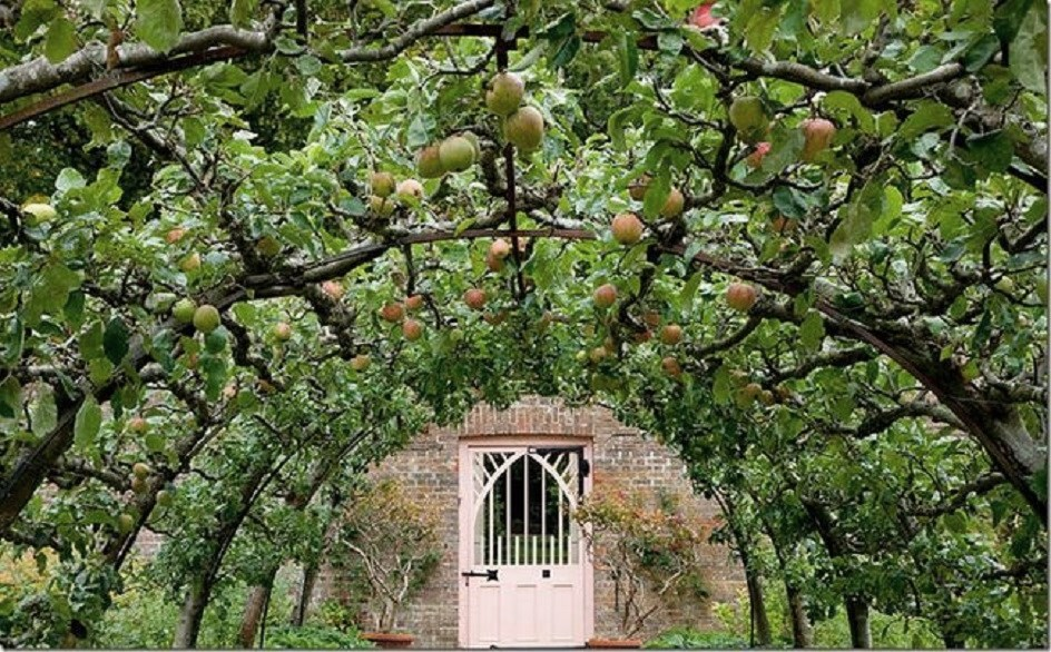 Espalier On Pinterest Fruit Trees Espalier Fruit Trees