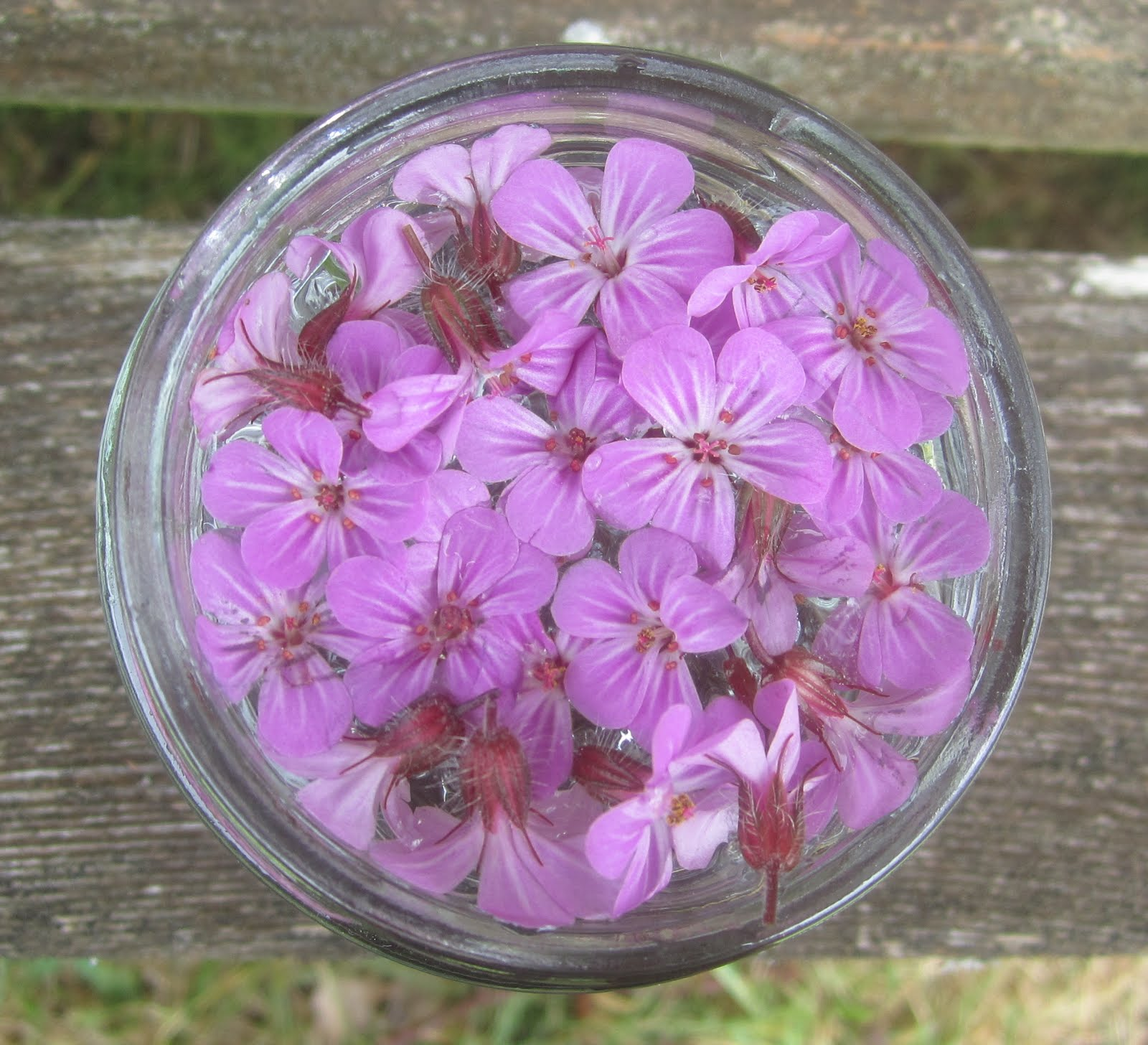 Herb Robert flower essence
