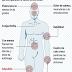 Bolivia: 254 casos dengue, 350 de chikunguña y 4 de zika