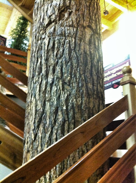 Tree in middle of amish mall