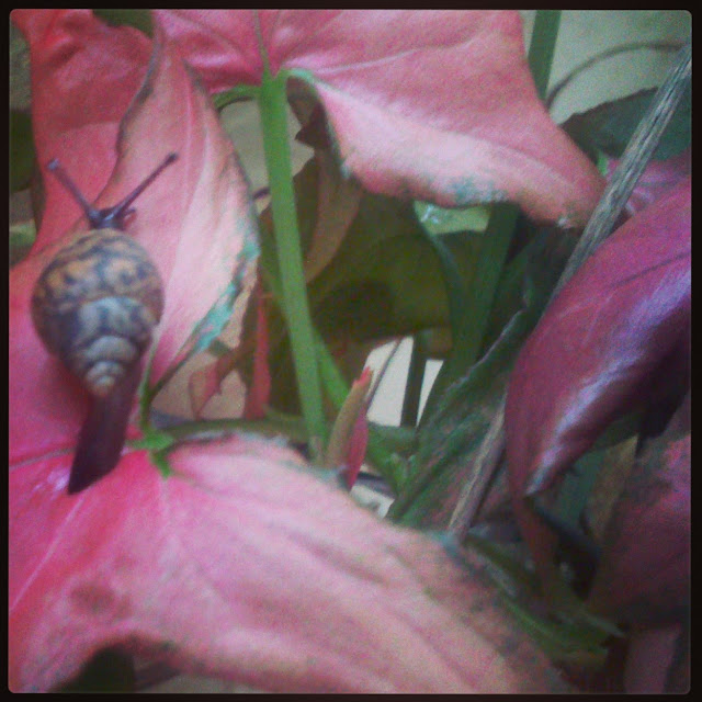 Snails on the leaves in the garden