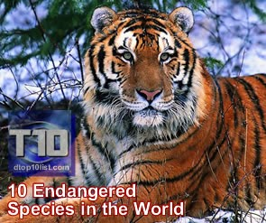 Top 10 Endangered Species in the World
