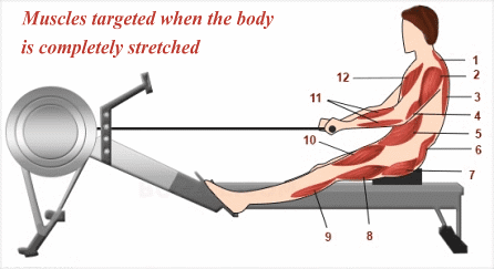 Fitness Rower Exercise The Entire Body