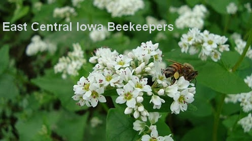 East Central Iowa Beekeepers