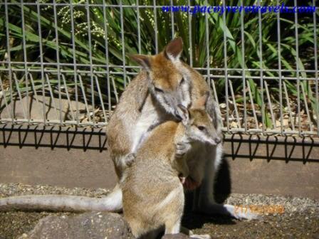 sidney: como ir a featherdale wildlife park