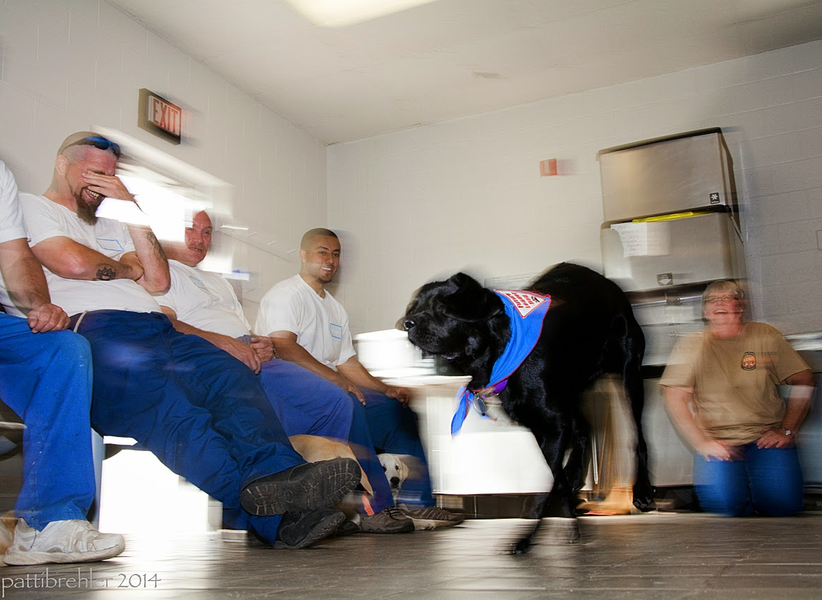 A very blurry shot of a young black lab running from right to left. The dog is wearing the blue Future Leader Dog bandana. There are four men sitting on lunch stools along the left side, all are wearing blue priosn pants and white t-shirts. There is a woman in the background on the right side wearing blue jeans and a tan t-shirt. She is on her knees, with her hands on her thighs. There is an open door in behind the guys on the left.