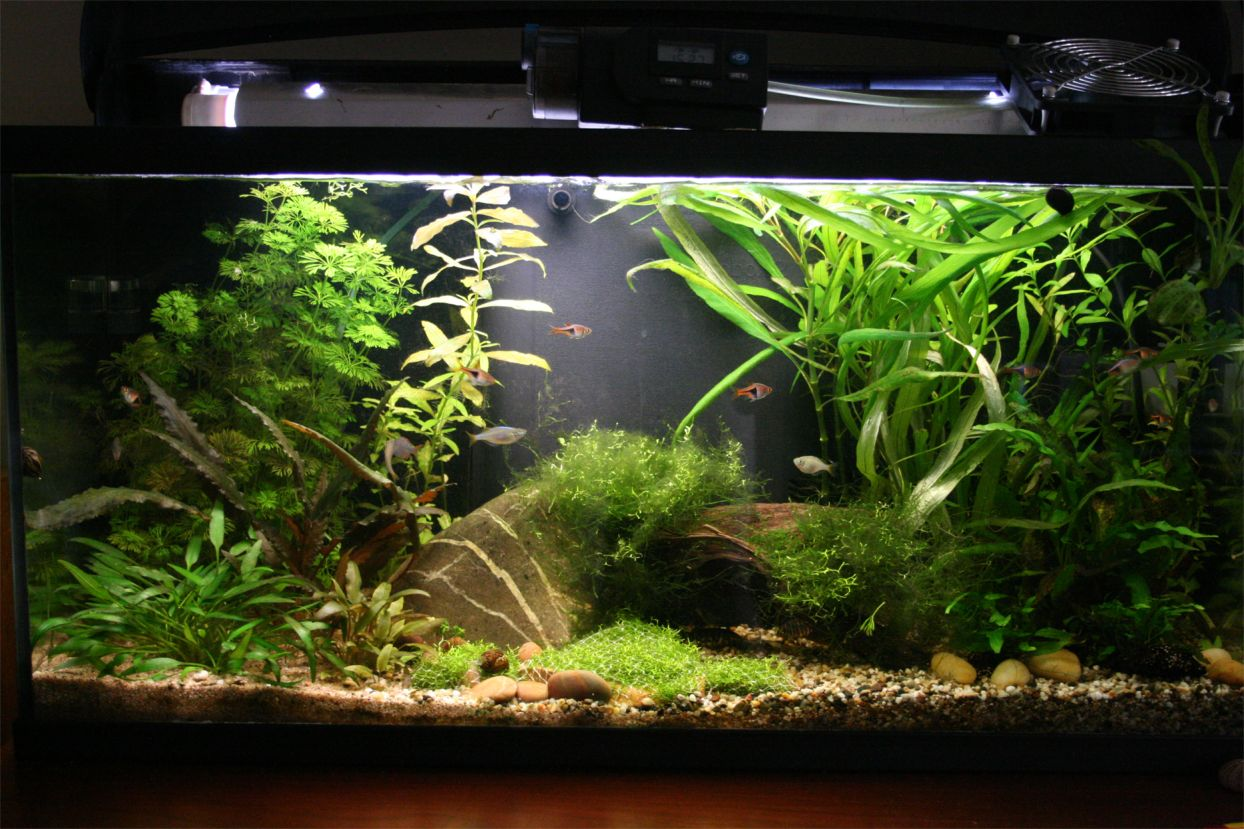 S c v aquascaping ideas south east asia biotope i for Aquarium aquatlantis