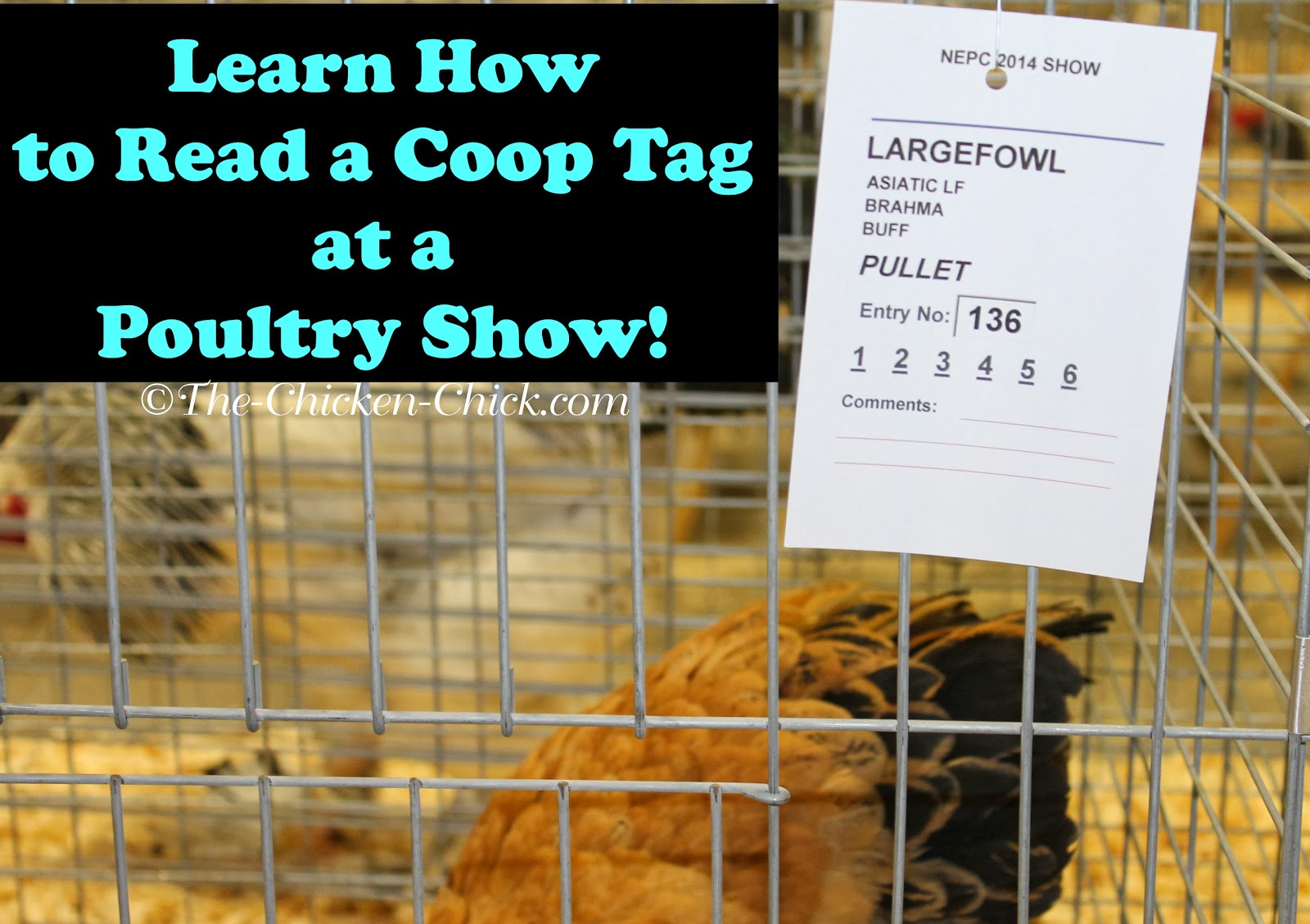 How to read a Coop Tag at a poultry show