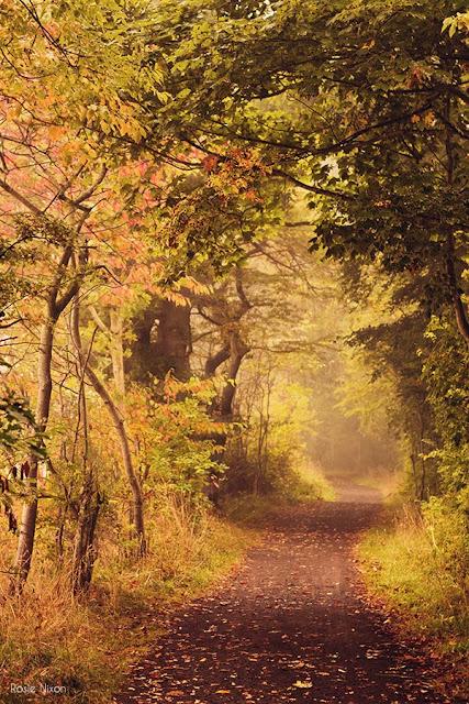 fog in a Perrthshire woodland