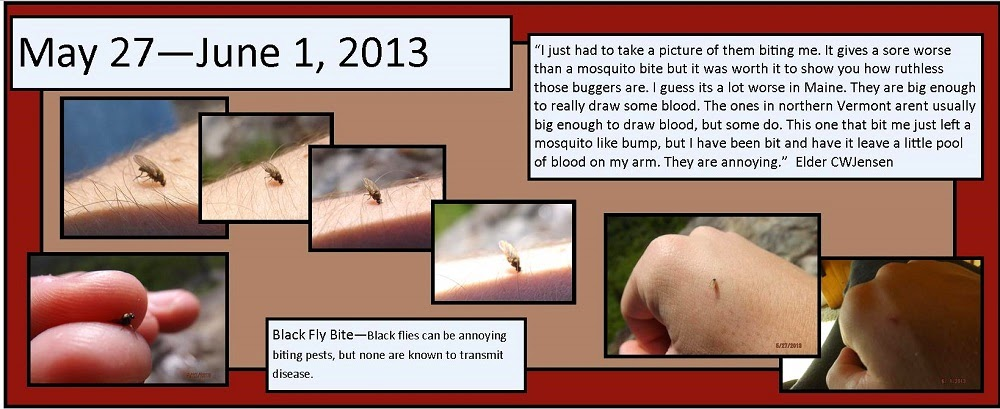 May 27, 2013 Black Fly Bite