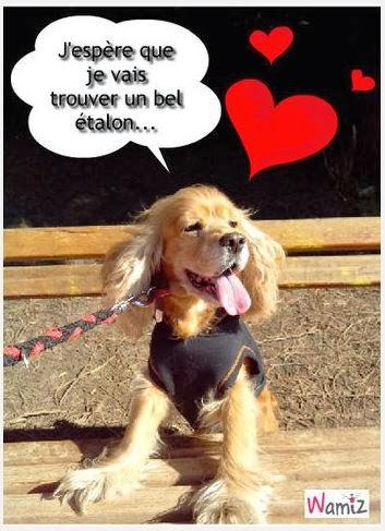 http://wamiz.com/tooniz/poulette-cherche-l-amour-57818.html