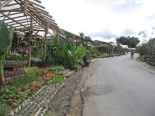 Wisata Bunga Cihideung Bandung