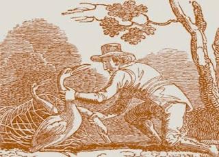 Il contadino e la cicogna (Esopo)