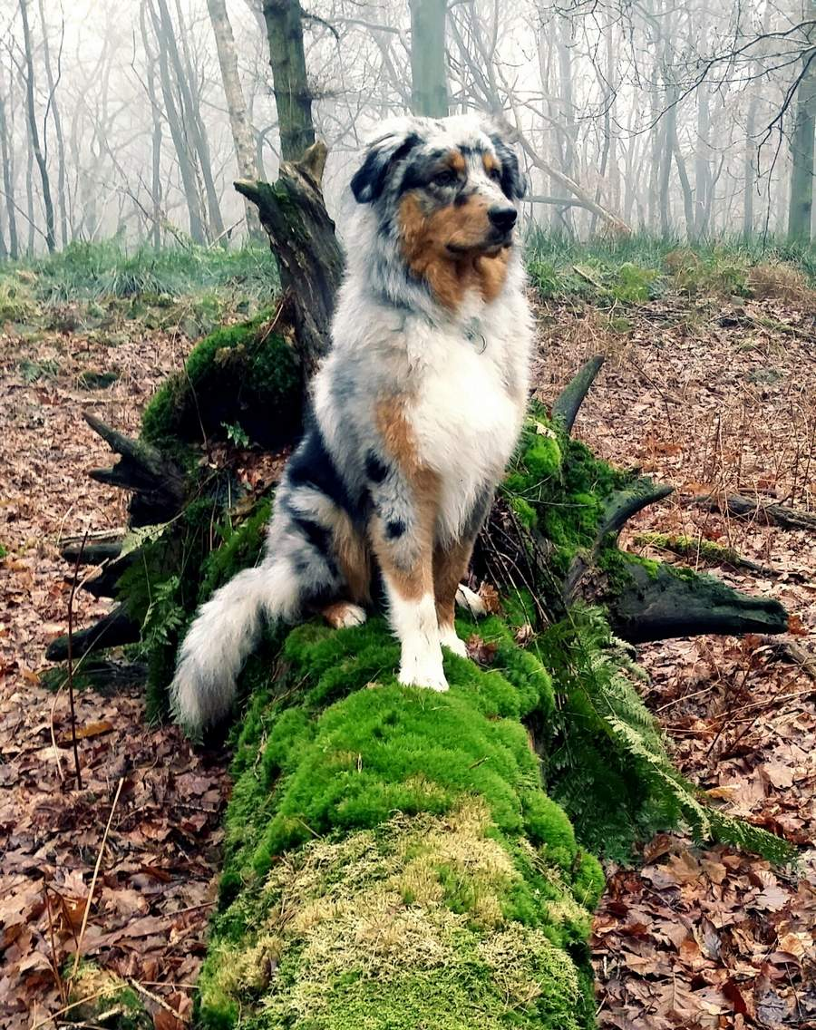 Cute dogs - part 110, cute dog photos, best dog images, best funny dog pictures