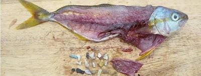 Analisis-de-pescado-con-restos_54437031438_51351706917_600_226