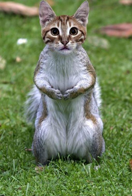 Fotos divertidas de animales diferentes mezclados con photoshop