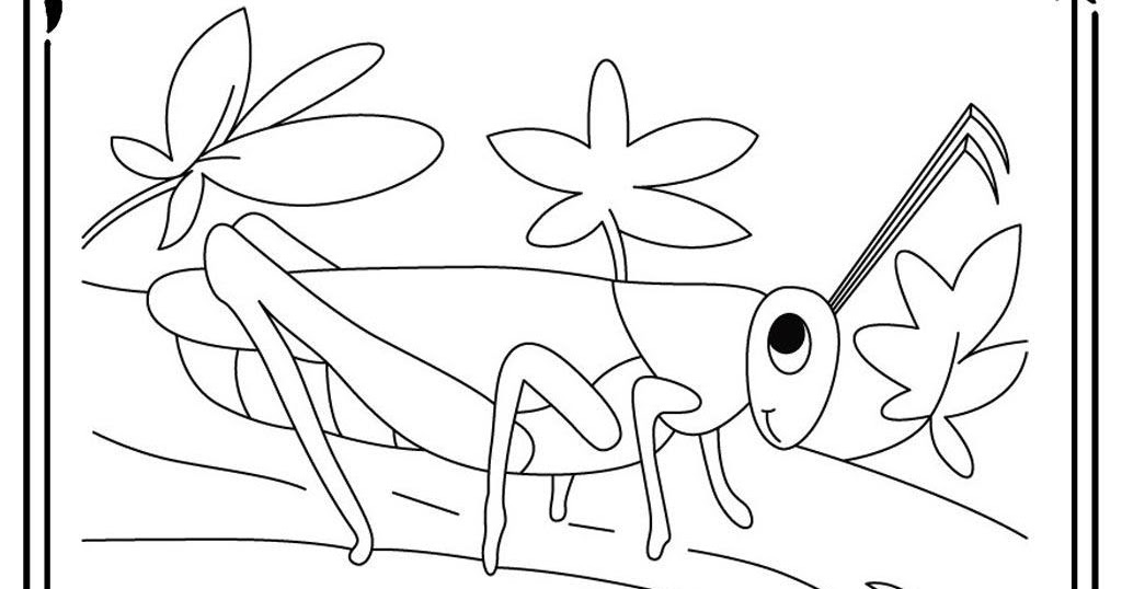 coloring pages of a grasshopper realistic coloring pages