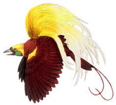 Burung Cendrawasih Yang Bisa Ditemukan Di Papuaindonesia Ini Sering Dijuluki Dengan Bird Of Paradise Atau Phoenix Bird Burung Ini Memang Memiliki Bentuk