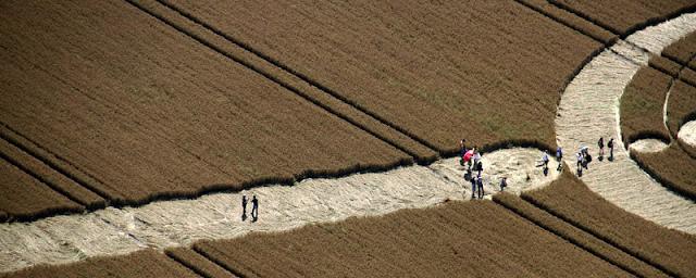 Crop Circles 2012 - Página 3 20120726+5