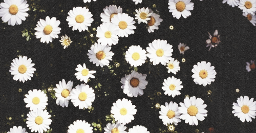 Flowers Tumblr