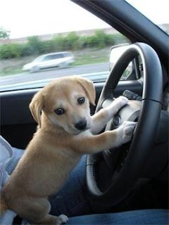 Puppy%2Band%2BCar.jpg