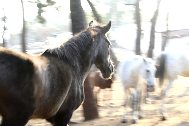 Horses, Heybeliada