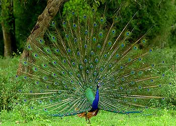 Bandipur National Park Karnataka