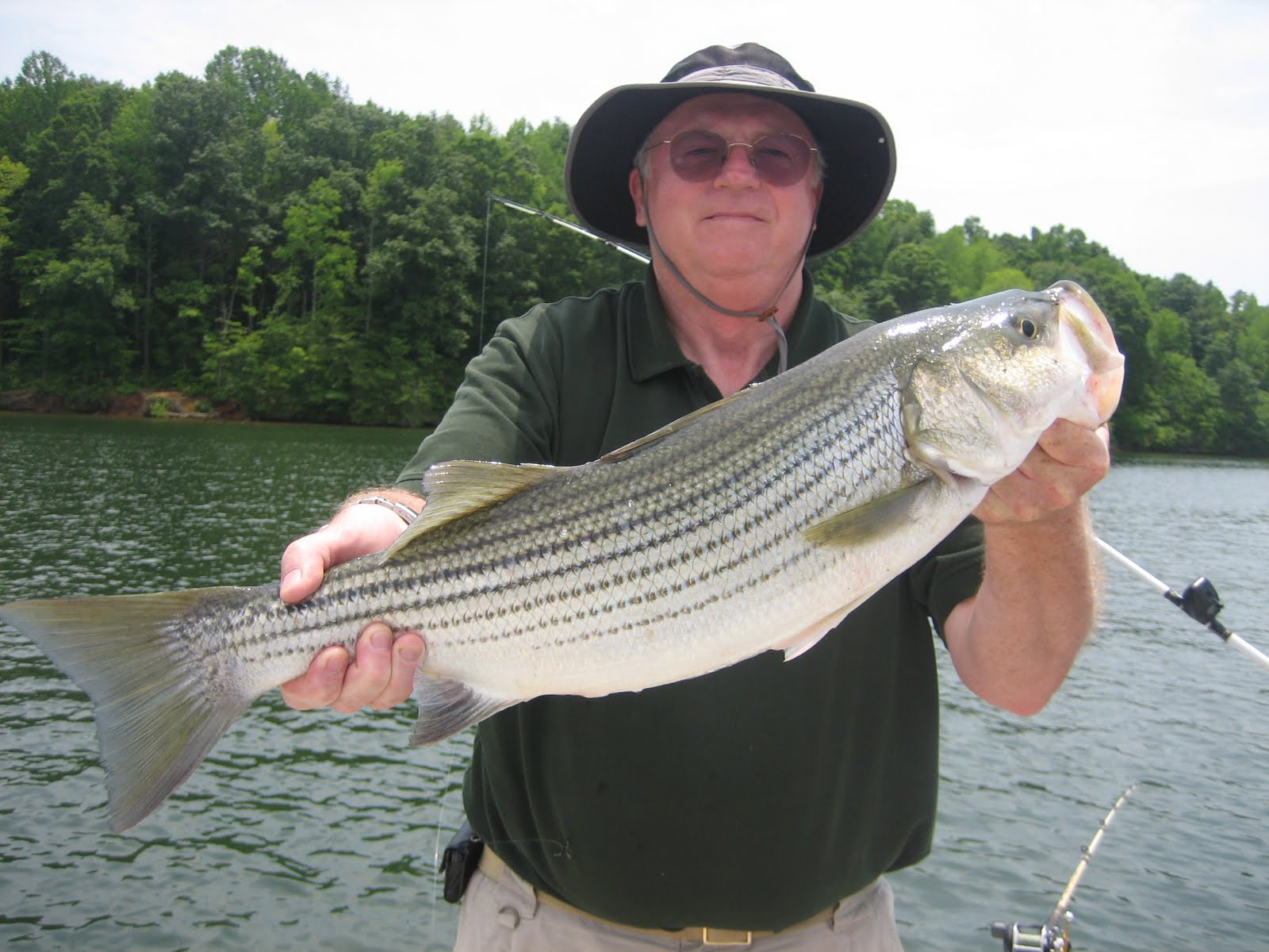 Lake anna striper guide journal john zook and al murphy for Lake anna fishing